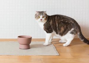 ニャンだこれ、贅沢な猫用水飲み器Cat Water Bowl